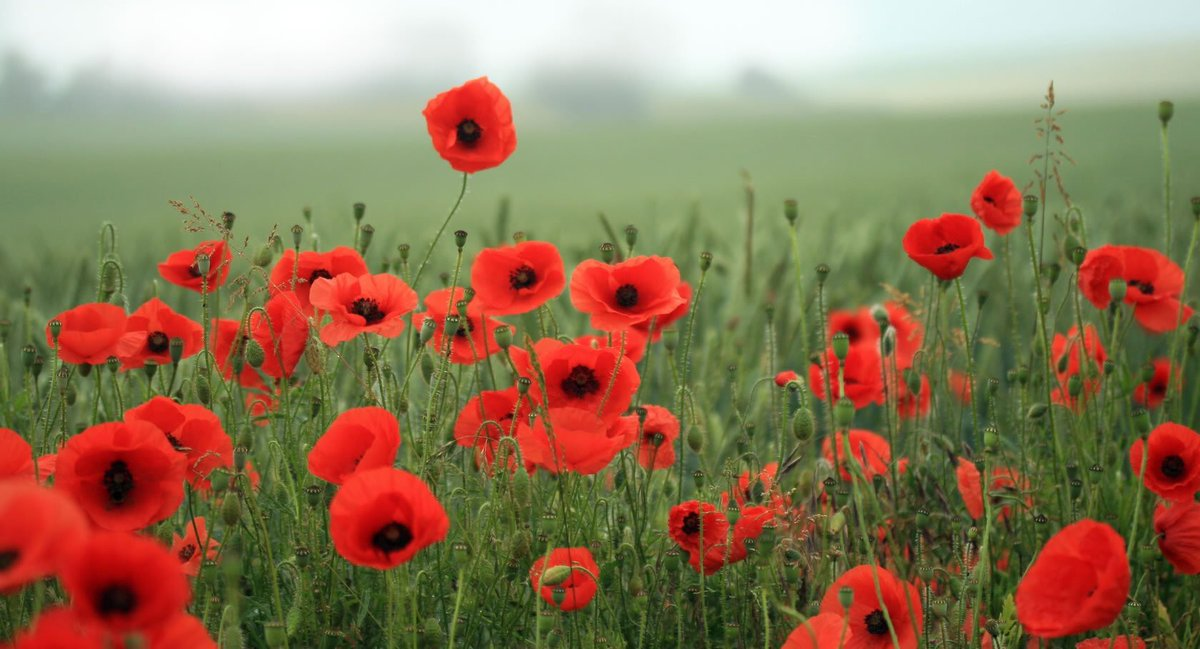 Lest we forget.  #ArmisticeDay https://t.co/w2trteheHJ