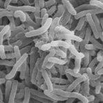 Tanzanian cholera outbreak kills 18: ministry