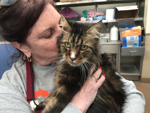 Adoptable #cat #Mattie_CCSTCA_06 Cuddly girl,loves to snuggleWill u b my forever home https://t.co/nkKtEXUyTi https://t.co/51vqx3ZBtD
