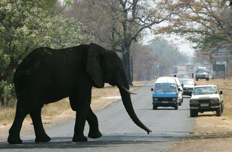 Tourists taking pictures trampled by elephant in Zambia