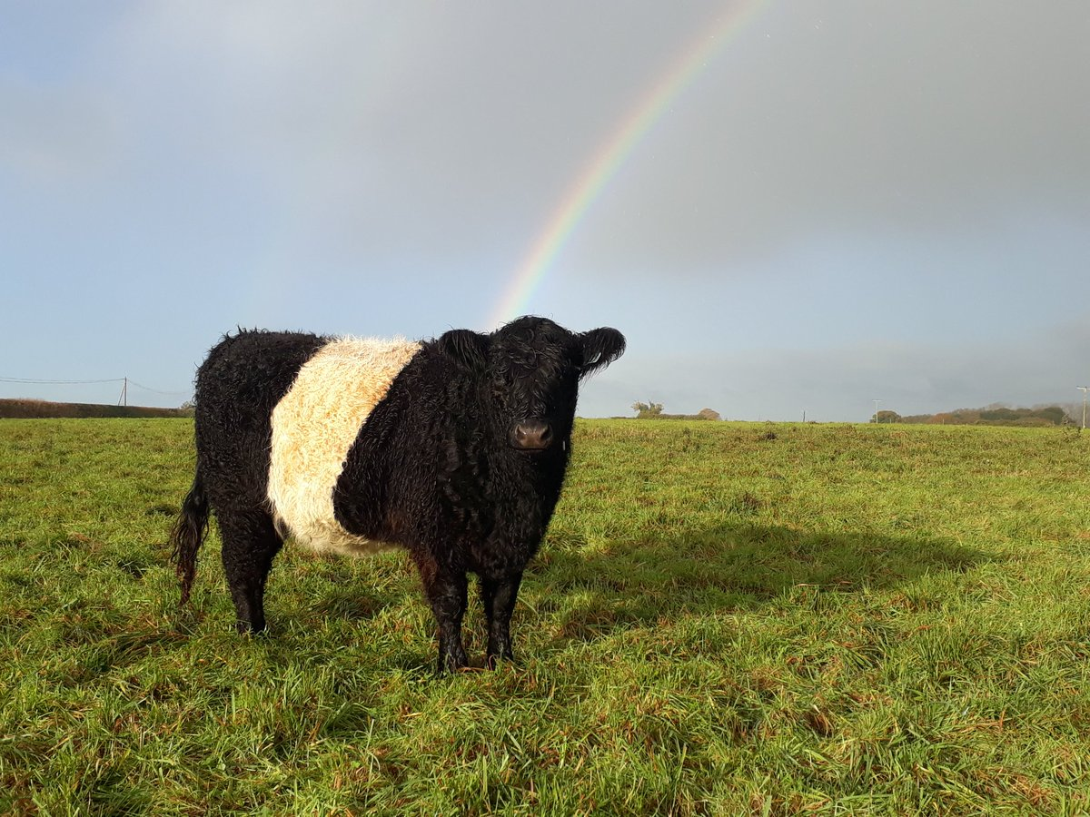 test Twitter Media - The aptly named Pearl was at the end of the rainbow this morning! 😀😀😀 #belties #waveney https://t.co/6EKyHlVcP4