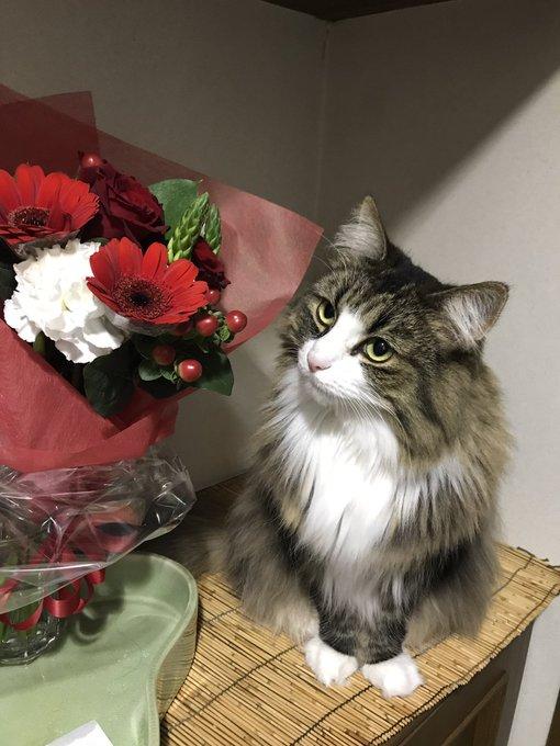 Forest Cat     Takuya Kimura Happy birthday. November 13