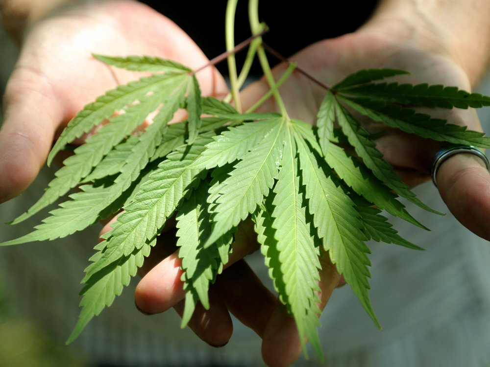 Weed is the new craft beer, says former Budweiser exec: 'Ignore it at your peril'