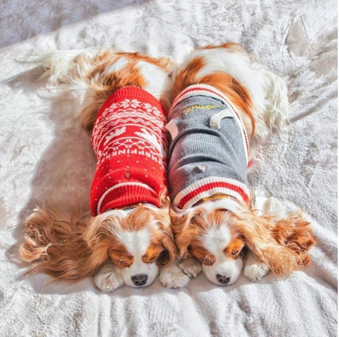 #SweaterWeather #EDbyPetSmart https://t.co/bVFxT7NIXt