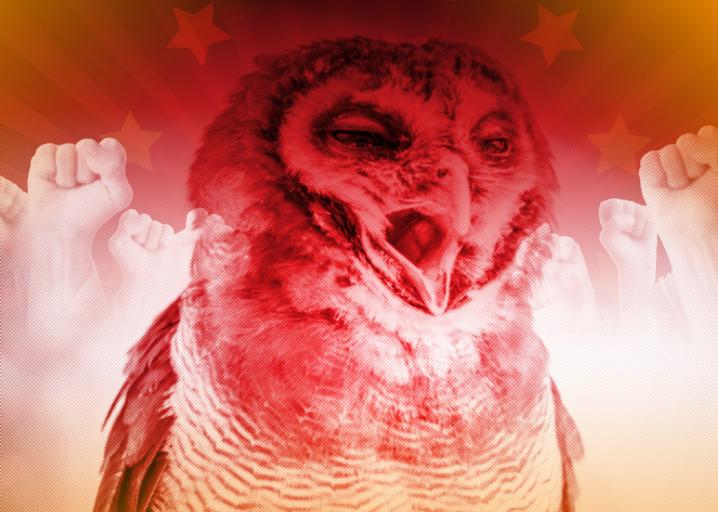 My dumb tweet about owl orgasms and socialism went viral. We should all feel bad: https://t.co/4ufPy2bnVn https://t.co/4vZkFuRzMV