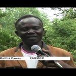 Kenyans urged to plant trees during rainy season