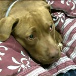 Dog found 40 miles from his Rocky Hill home after missing for months