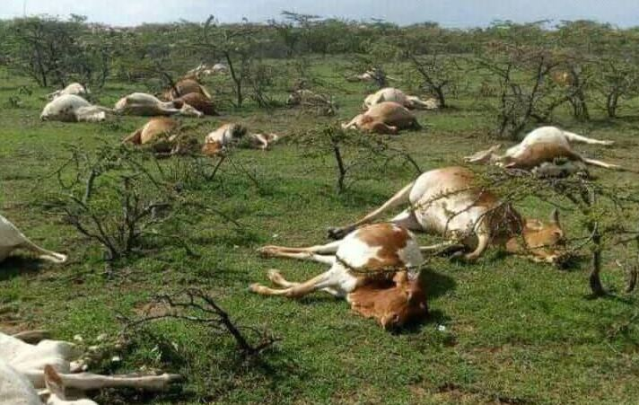 Lobbyists want Laikipia farmers compensated for lost cattle – Kass Media Group