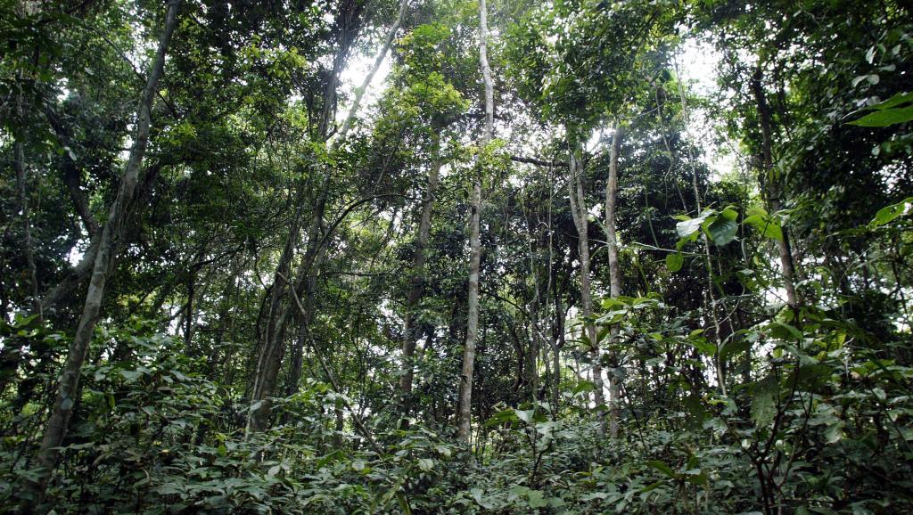 Protection des forêts au Congo-B: un bateau de Greenpeace refoulé à Pointe-Noire