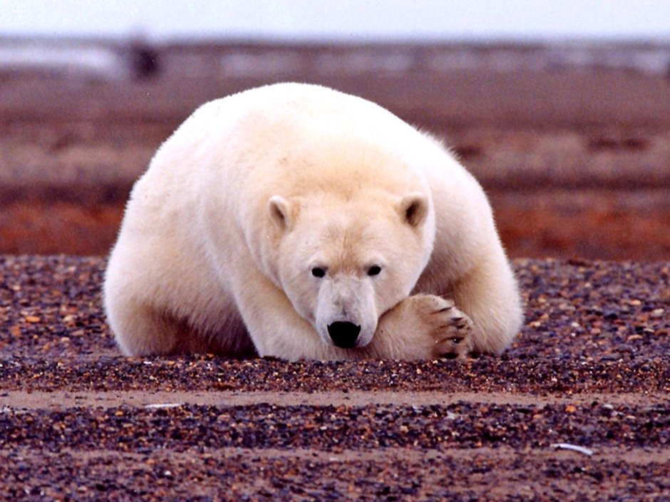 U.S. Senate panel advances quest for oil in Arctic refuge