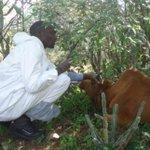 Farmers aid in spread of drug resistant diseases