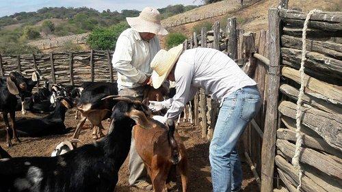 #MAG fortalece la atención a caprinos en #Zapotillo @AgriculturaEc #Loja https://t.co/EKvUjzkdyR https://t.co/UMqoxlPxn2