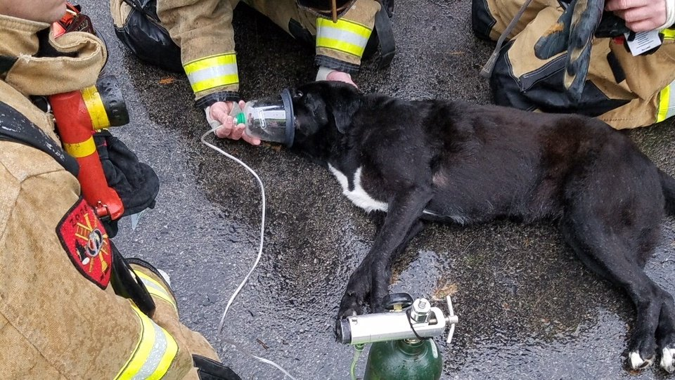 Dog rescued, revived after Kentucky house fire