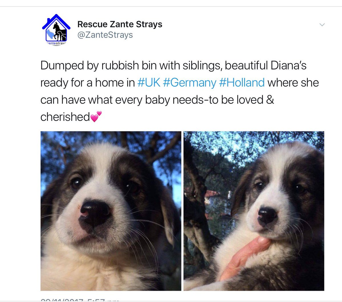 RT @ZanteStrays: ????Diana's reserved???? https://t.co/N2AYzSR7ne