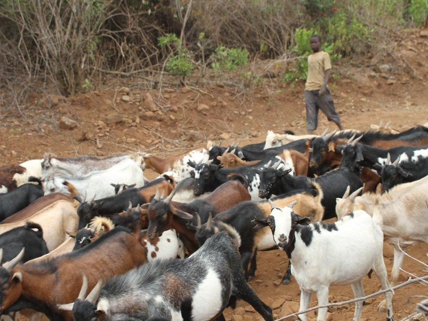 Baringo man kills self after brother 'sold' his 8 goats and kids — only livelihood