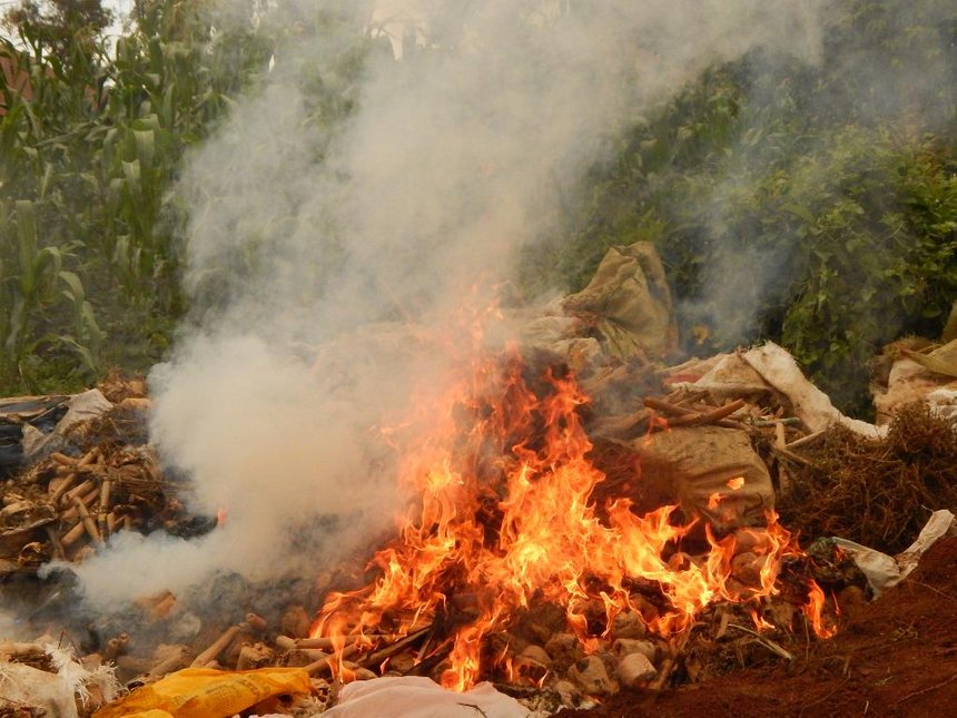 Rongo police torch Sh10 million bhang, warn of more arrests during Christmas