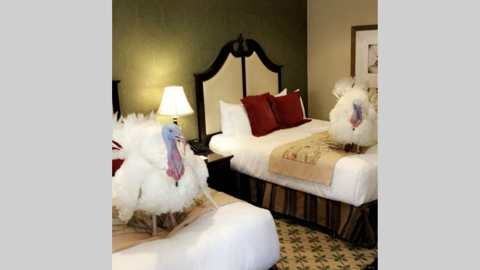Turkeys arrive in Washington for White House pardoning ceremony https://t.co/cQr7G7LqtG https://t.co/EJ5z1God0i