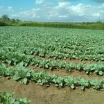Embrace technology to increase production, Farmers urged
