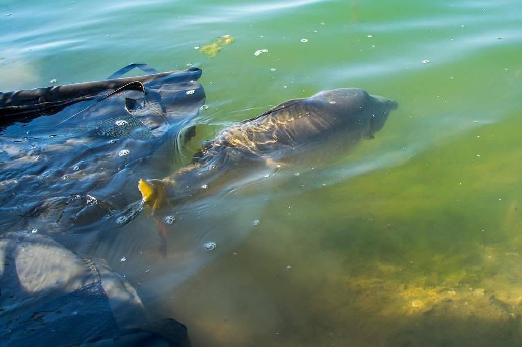 #onthebank #lkbaits #carpfishing #fishing #angling #karpfenangeln #angeln #rybolov #<b>Catchandrelea