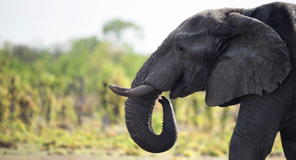 Groups file suit over elephant trophy decision https://t.co/NoN2NFTz1S https://t.co/JqUSQQ5HFe