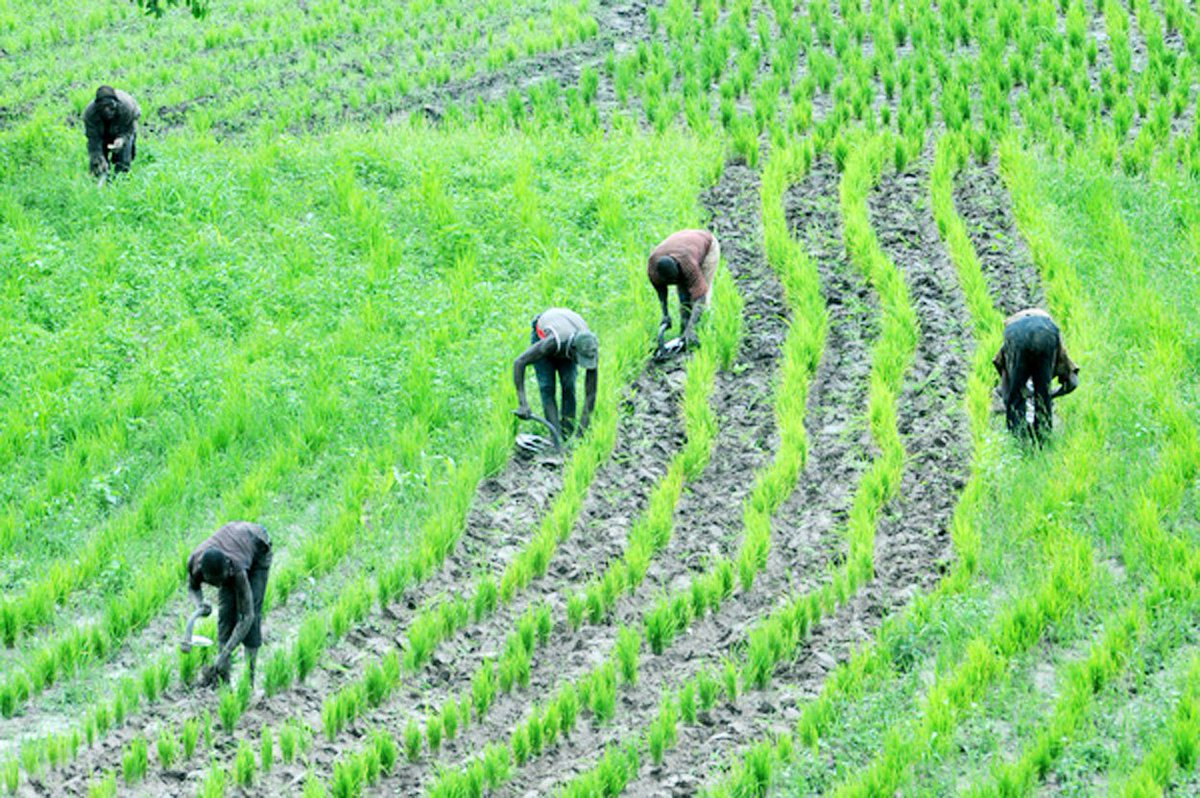 FG provides agro chemicals, tools for farmers in Ondo