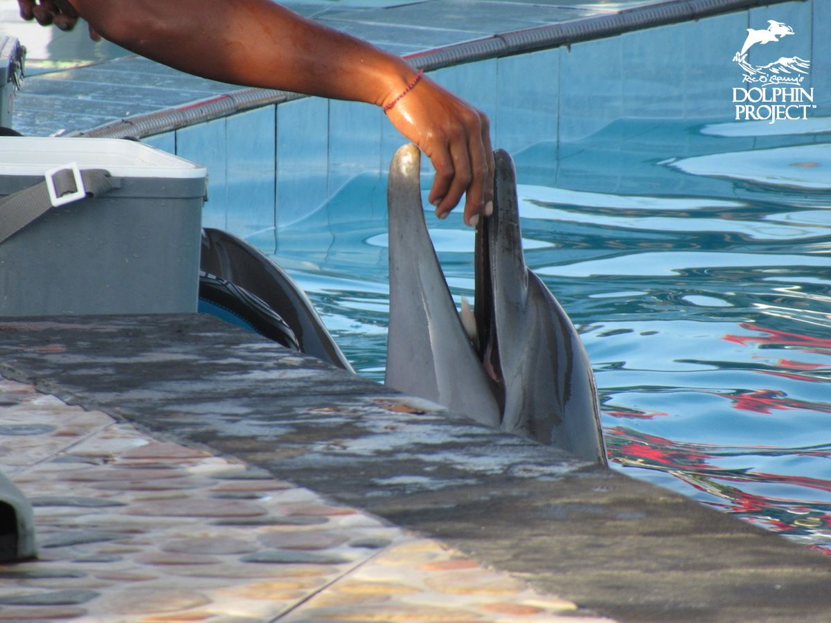 Extreme Cruelty Towards Indonesia's Dolphins https://t.co/3448PIffd6 #DolphinProject #StopSirkusLumba https://t.co/fladlENjZm