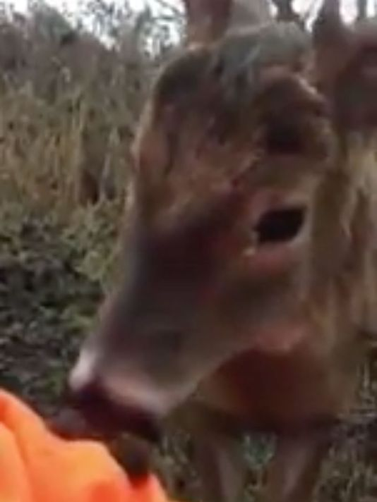 Deer hunter's video of encounter with friendly young buck goes viral