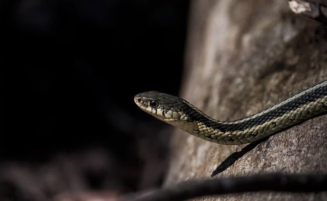 Snake On A Train, Man Who Killed Him With Bare Hands Is Internet Hero
