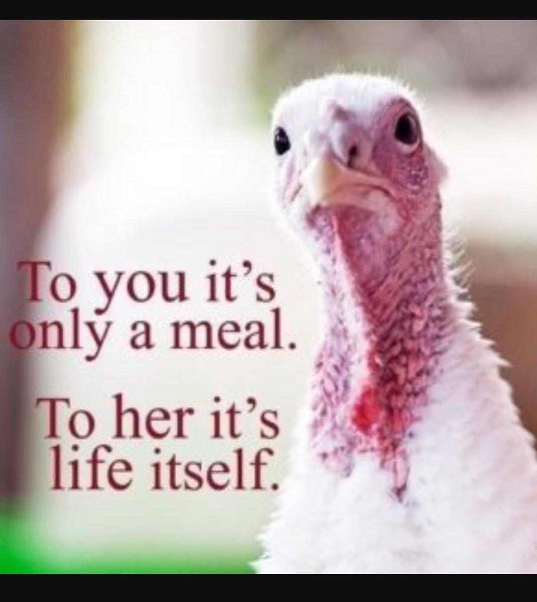 Happy thanksgiving #thanksgiving xJZ9PubeeL