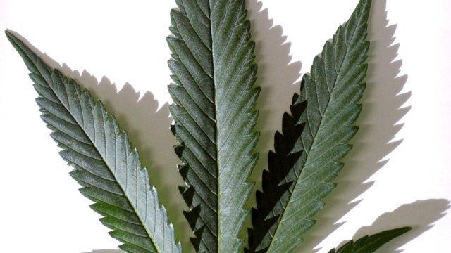 Colorado man facing marijuana charges in Iowa