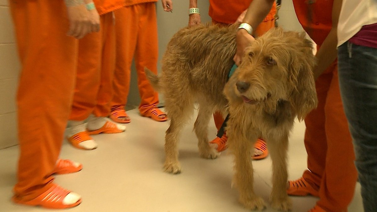 Tuck therapy: Dog leaves lasting friendship with inmates