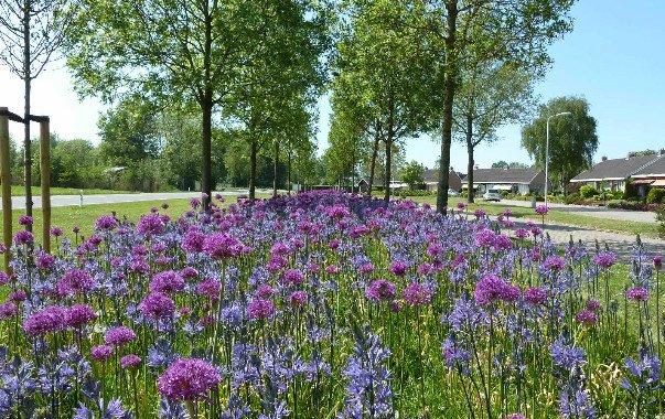 Leefomgevingsfonds investeert in bloembollen voor biodiversiteit https://t.co/8QWH34fFba https://t.co/FbcZcpWx4T