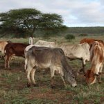 Are leases in Laikipia about to start expiring?