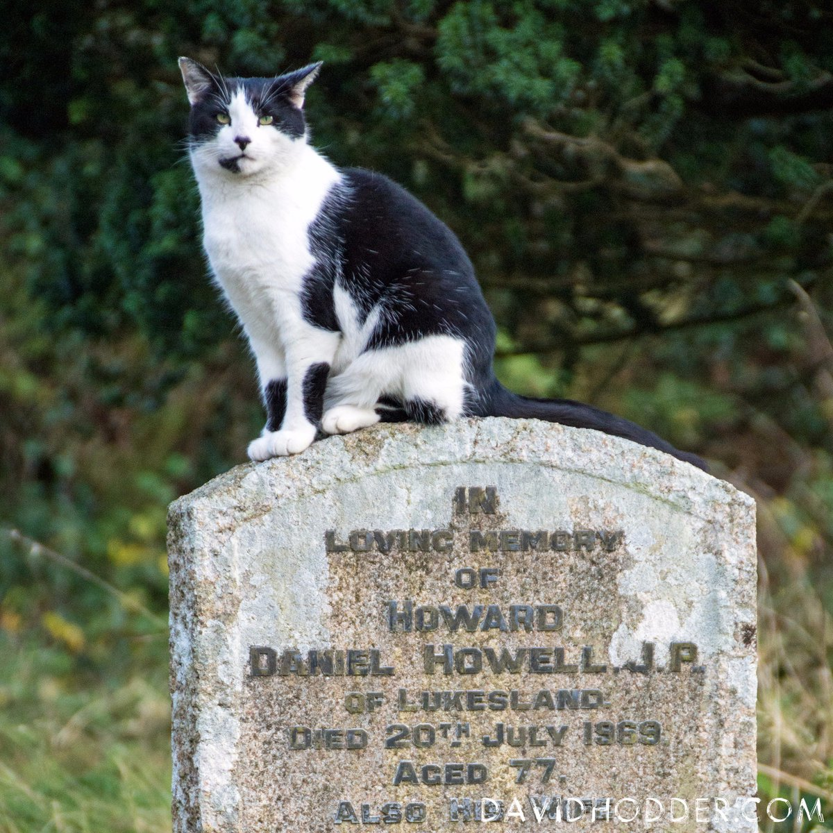 test Twitter Media - Not sure who Howard is but, if he liked cats, then he'd love the fact Felix is sat on his headstone.  #Ivybridge #Devon  #Photography #Cats #Felix #Headstone #CatsOfTwitter https://t.co/C8h9Ldb9Bj