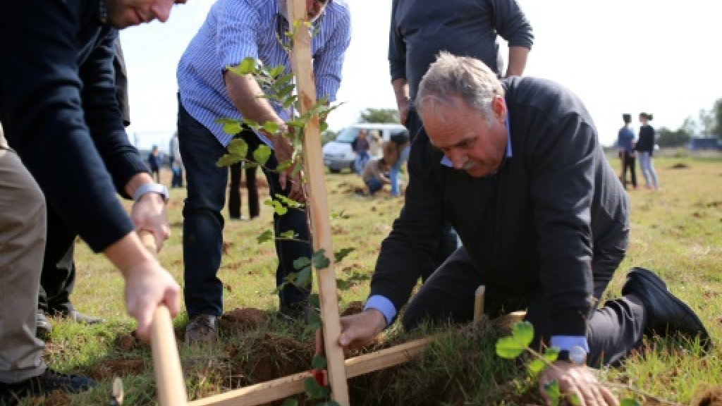 Thousands of carob trees planted as Cyprus revives 'black gold'