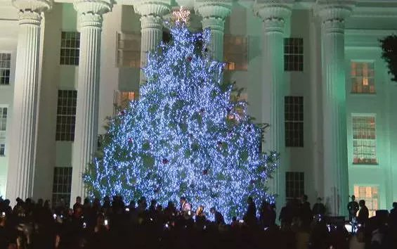 Official state Christmas tree to arrive at AL Capitol Monday