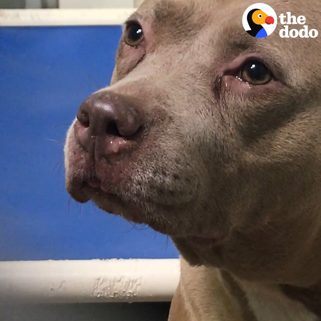 RT @dodo: This shelter dog couldn't stop crying — but she had NO IDEA she was about to meet her brand-new family ???? https://t.co/HOyVi6uvrZ