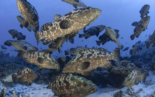 Fiji govt moves to combat decline in fish stocks