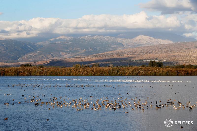 Migrating birds winter in Israel as climate change makes desert too dangerous