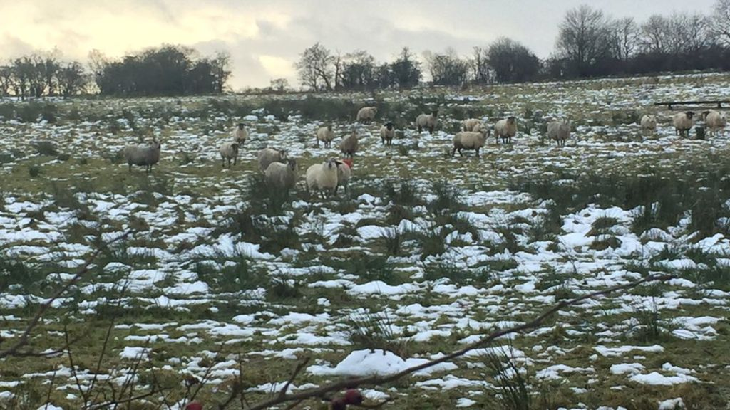 Department of Agriculture writes off £5m in farmer overpayments