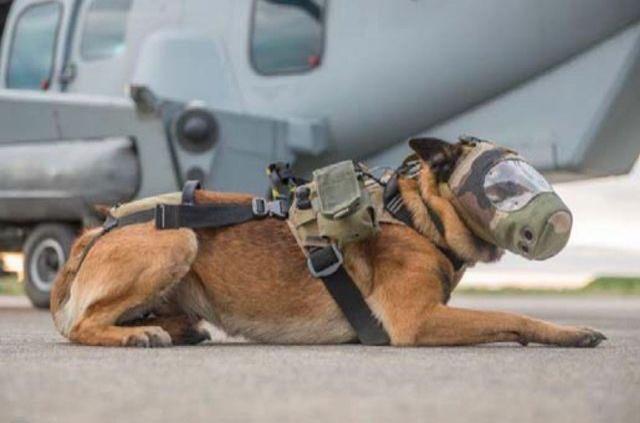 Une médaille pour Djony : les chiens-héros ont désormais leurs trophées https://t.co/NrvBLMRGnk #Société https://t.co/eDURA4kaMu