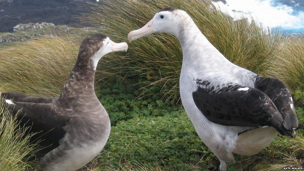 World's seabirds at risk of extinction due to overfishing & changing sea temperatures  https://t.co/AkKE2HbpMI https://t.co/nSzfQRovVn