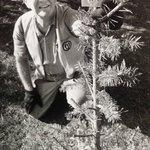 Old Austin Christmas photos: Trees in the raw | Austin Found
