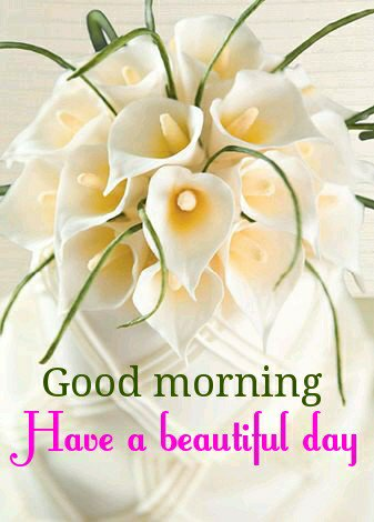 @kauserseema  #THANKS LOVELY FRIENDS FOR WISHES AND RTS #GOOD MORNING  #HAVE  A BLESSED DAY  #STAY CALM AND COOL https://t.co/CJFhrDV5Z0