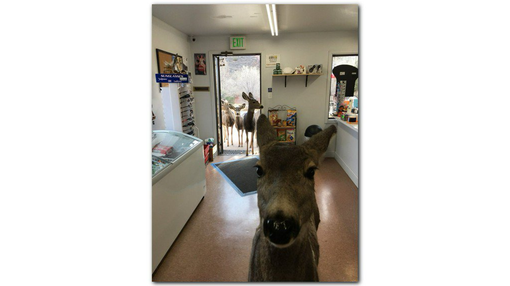 Woman takes epic photo after deer waltz into Colorado store https://t.co/wexqW1ZVje https://t.co/L4UwpBIoQ5