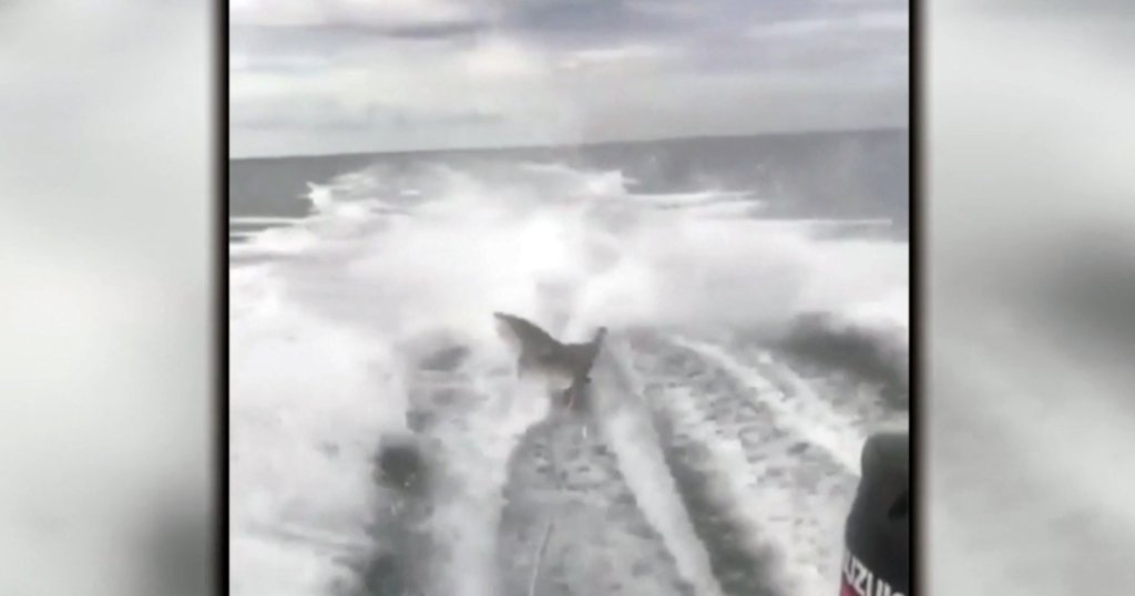 Officials charge 3 men in connection to shark dragging video incident https://t.co/UBWH1Icyg7 https://t.co/5tZKFTBHXr