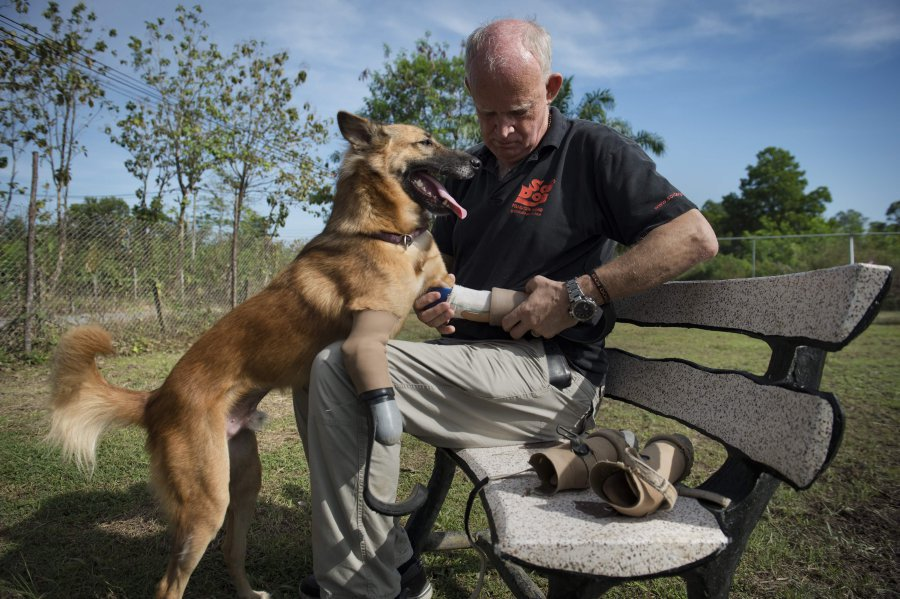 'Blade runner' legs give maimed Thai dog new lease on life