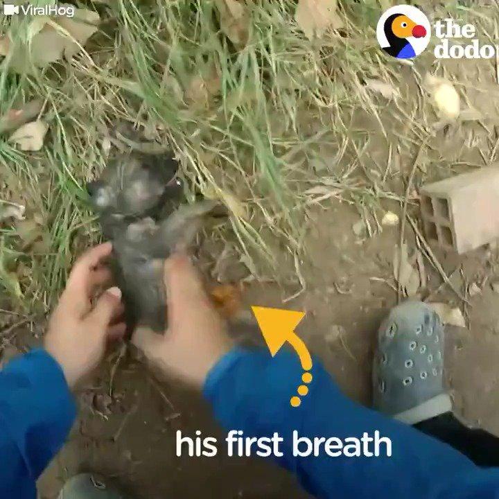 Boğulmak üzere olan bir yavru köpeği plastik şişeyle hayata döndüren muhteşem adamın o anları. https://t.co/64jsgA6H2C