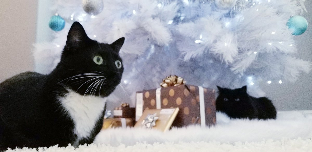 I think the cats like the Christmas tree 7wLh7b2t5G