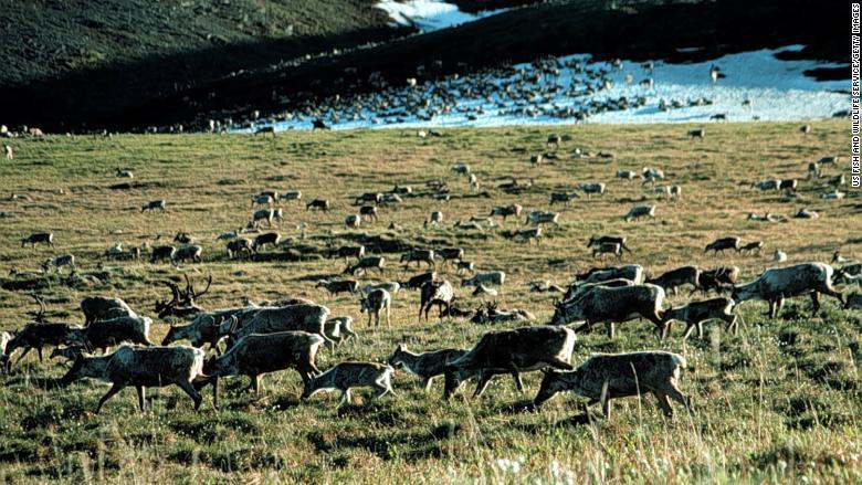 The Senate tax bill would allow oil drilling in Alaskan wilderness